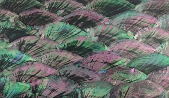 Abalone Donkey Ear Lacquer Veneer Laminate Sheets